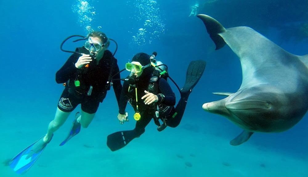 Sukeltamassa Eilatin Dolphin Reefillä. Kuva: Dolphin Reef